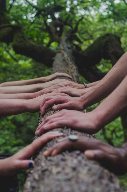 Hands on the Tree Trunk